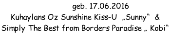 "H-Wurf geb. 17.06.2016 Kuhaylans Oz Sunshine Kiss-U  ""Sunny""  &    Simply The Best from Borders Paradise "" Kobi"""